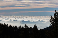 A sea of clouds is illuminated behind the forest. A sea of clouds is illuminated behind stock photos