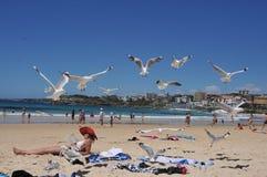 Sea Coast Australia. Sydney stock photos
