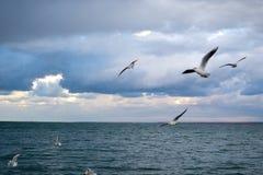 The Sea coast Stock Images