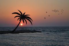 Sea coast with palm on sunrise. Sea coast with palm and birds flying on sunrise Royalty Free Stock Photo