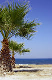 Sea coast with palm tree Stock Image