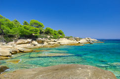 Sea coast under blue sky. Sea coast with pines under blue sky Royalty Free Stock Photos