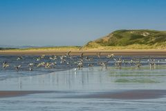 Sea, Coast, Sky, Shore stock image