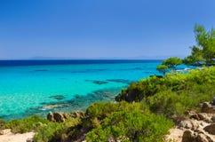 Sea coast under blue sky. Sea coast with pines under blue sky Stock Images