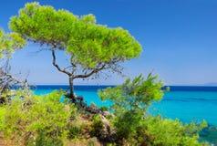 Sea coast under blue sky. Sea coast with pines under blue sky Stock Image