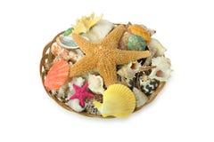 Sea cockleshell Stock Image