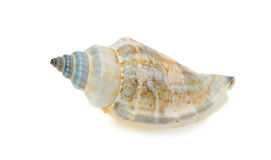 Sea cockleshell Royalty Free Stock Photos