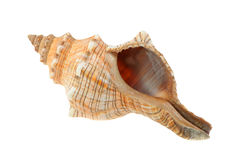 Sea cockleshell Royalty Free Stock Photography