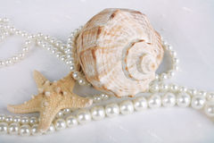 Sea cockleshell with pearls. Sea cockleshells with pearls on white background Royalty Free Stock Images