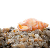 Sea cockleshell on  sand Stock Photography