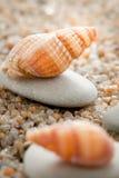 Sea cockleshell on  sand Royalty Free Stock Photos