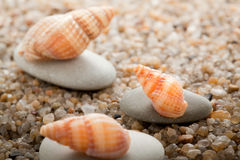 Sea cockleshell on  sand Royalty Free Stock Images