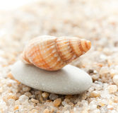 Sea cockleshell on a stone Royalty Free Stock Images
