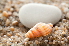 Sea cockleshell on a stone Royalty Free Stock Photography