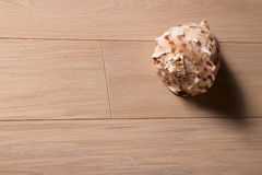 Sea cockleshell on a wooden background Stock Photo