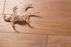 Sea cockleshell on a wooden background Royalty Free Stock Photo
