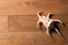 Sea cockleshell on a wooden background Stock Photos