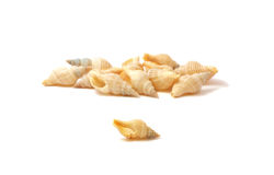 Free Sea Cockleshells Royalty Free Stock Images - 22895249