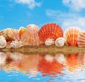 Sea cockleshells Stock Image