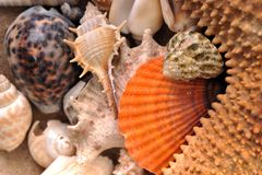 Sea cockleshells Royalty Free Stock Photography