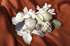 Sea cockleshells and coral Stock Photography