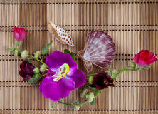 Sea cockleshells and orchid on straw napkin Royalty Free Stock Image