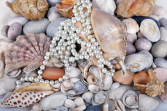 Sea cockleshells and pearls Stock Photos
