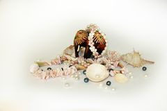 Sea cockleshells and pearls on a black background stock image