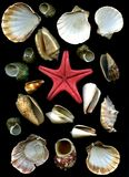 Sea cockleshells and starfish Royalty Free Stock Photos