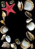 Sea cockleshells and starfish Royalty Free Stock Photography