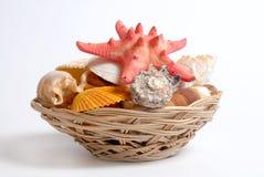 Sea cockleshells and starfish in wattled basket Stock Photography