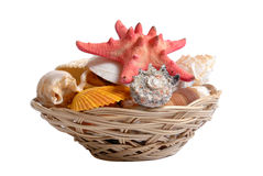 Sea cockleshells and starfish in wattled basket on white Stock Images