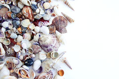 Sea cockleshells Stock Photo