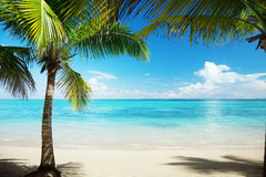 Sea and coconut palm royalty free stock image