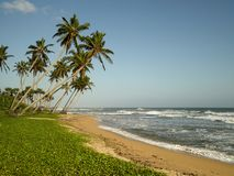 Sea and coconut palm Stock Photos