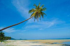 Sea and coconut palm Stock Image