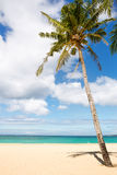 Sea and coconut palm Royalty Free Stock Photos