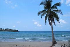 Sea and coconut palm , Thailand Stock Photo
