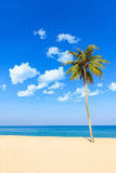 Sea and coconut palm Royalty Free Stock Images
