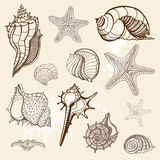Sea collection. Hand drawn  illustration Stock Images