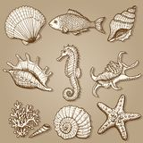 Sea collection. Original hand drawn illustration Royalty Free Stock Photography