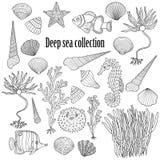 Sea collection: shells, starfish, seaweed, deep sea fish, seahor Royalty Free Stock Image
