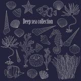 Sea collection: shells, starfish, seaweed, deep sea fish, seahor Royalty Free Stock Photos