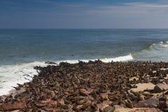 Sea colony at Cape Cross Stock Photo