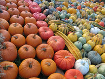 Sea of colorful diversified pumpkins Royalty Free Stock Photos