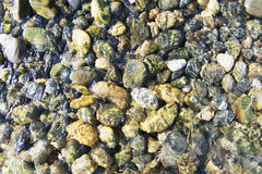 Sea colorful pebbles in pure water Stock Image