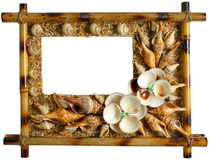 Sea conch and bamboo. Picture of sea conch and bamboo Royalty Free Stock Photos