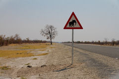 Sea consciente de elefantes Foto de archivo libre de regalías