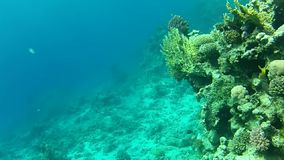 Sea, coral reef stock video footage