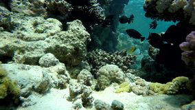 Sea, The corals and fish. Coral reef. Exotic fishes. The beauty of the underwater world. Life in the ocean. Diving on a tropical reef. Submarine life. Clear stock video